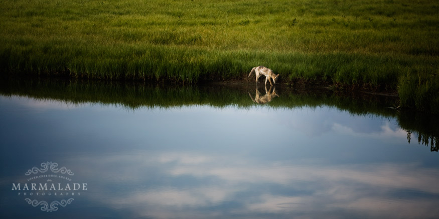 Reflection at Yellowstone National Park